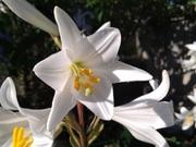 Растения для адаптированные для открытого грунта