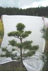 Садовые бонсаи