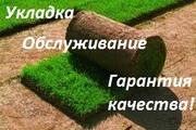Рулонный газон отличного качества! Продажа и укладка.