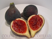 Продам Инжир в горшках,  комнатное растение и много других растений.