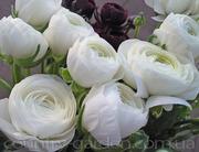 Продам замечательные цветы Лютики и много других растений.